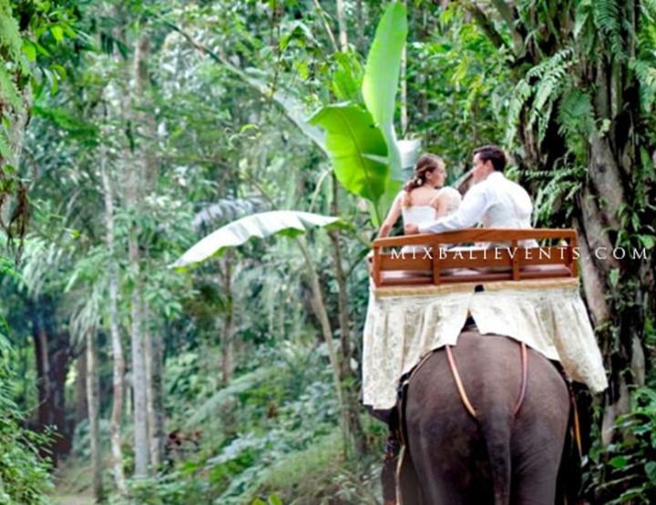 Сафари-парк & Слоны