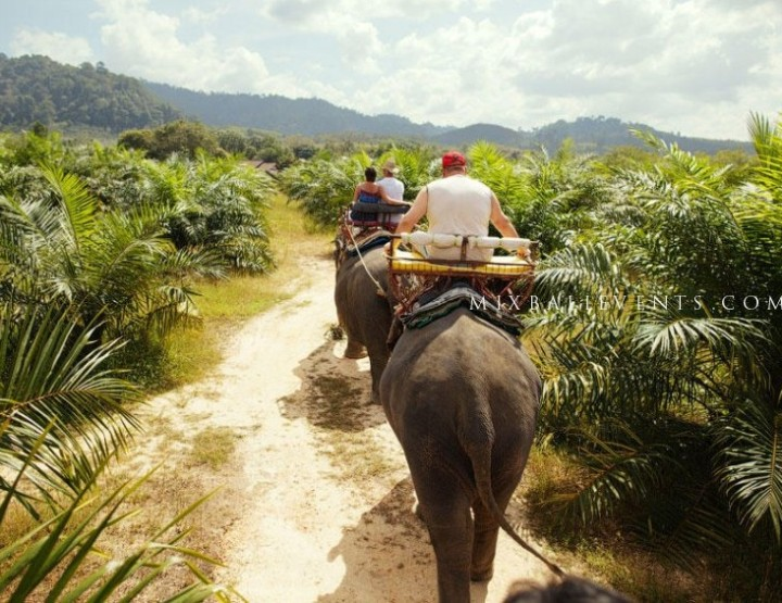 Катание на слонах в Джунглях